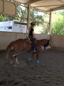 SL Barrel Horses Lessons