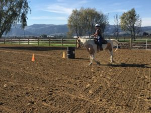Barrel Racing Training and Lessons